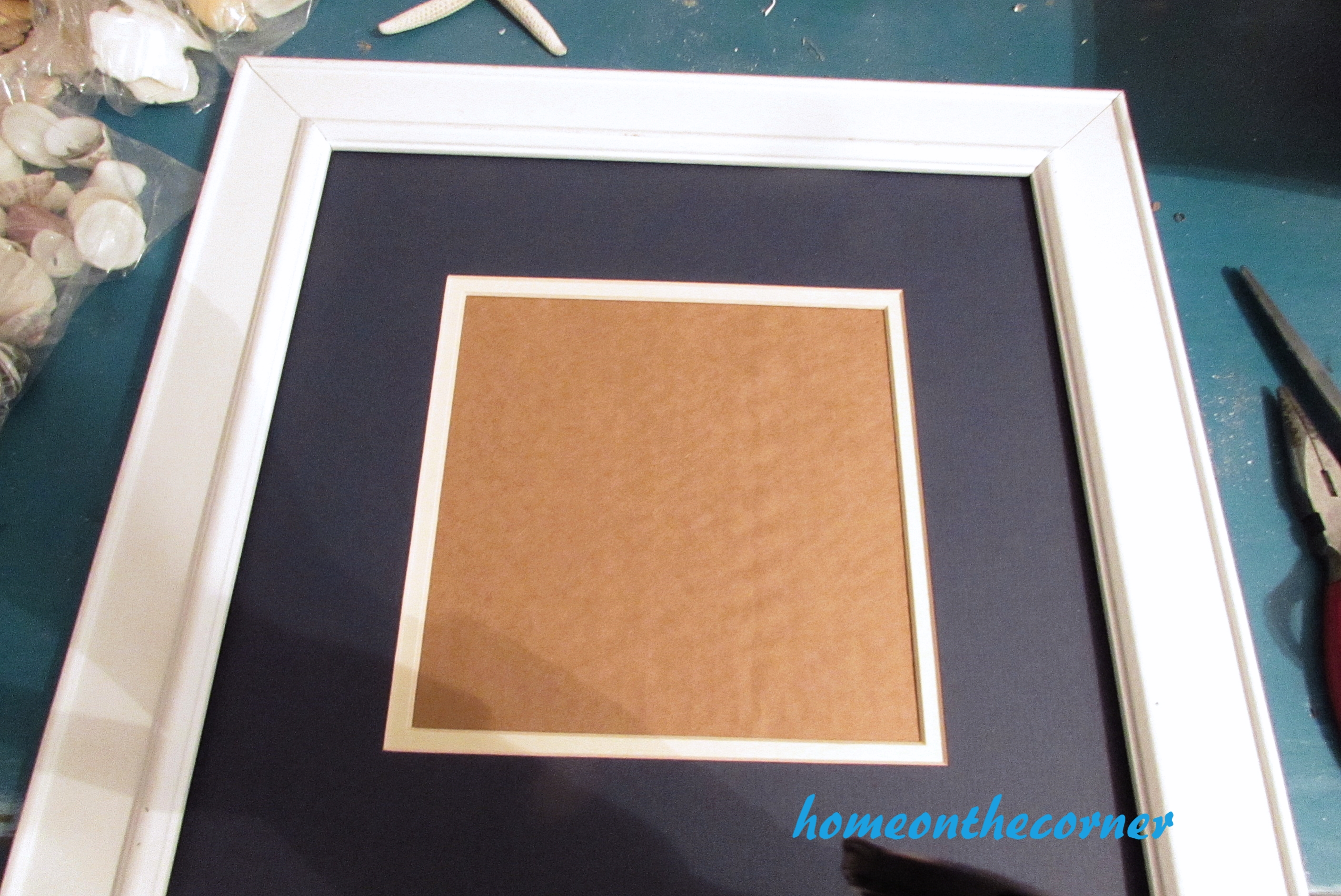 seashell speciman frame