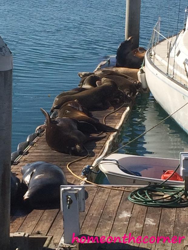 Sunbathing Seals