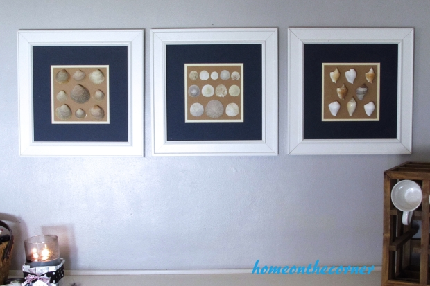 seashell speciman frame art 3 set