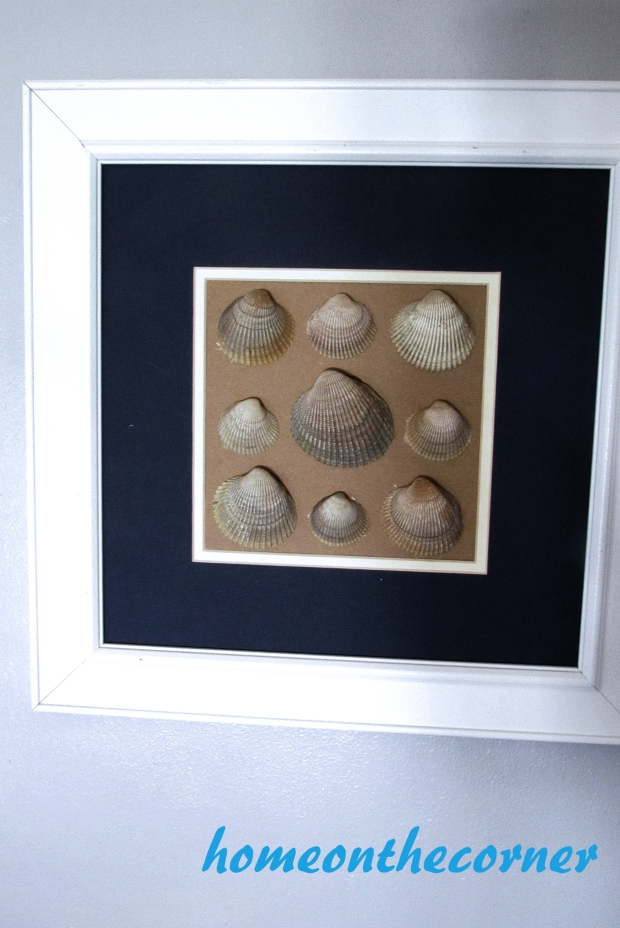 seashell speciman frame ridged clam shells