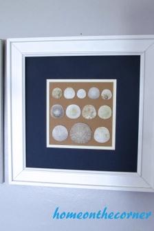 seashell speciman frame sand dollars