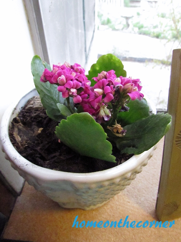 potted flower on windowsill