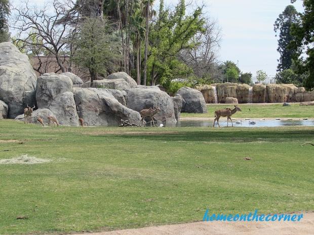zoo trip gazelle