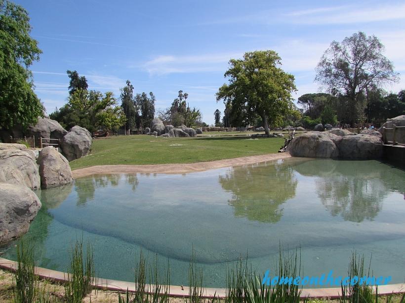 zoo trip watering hole