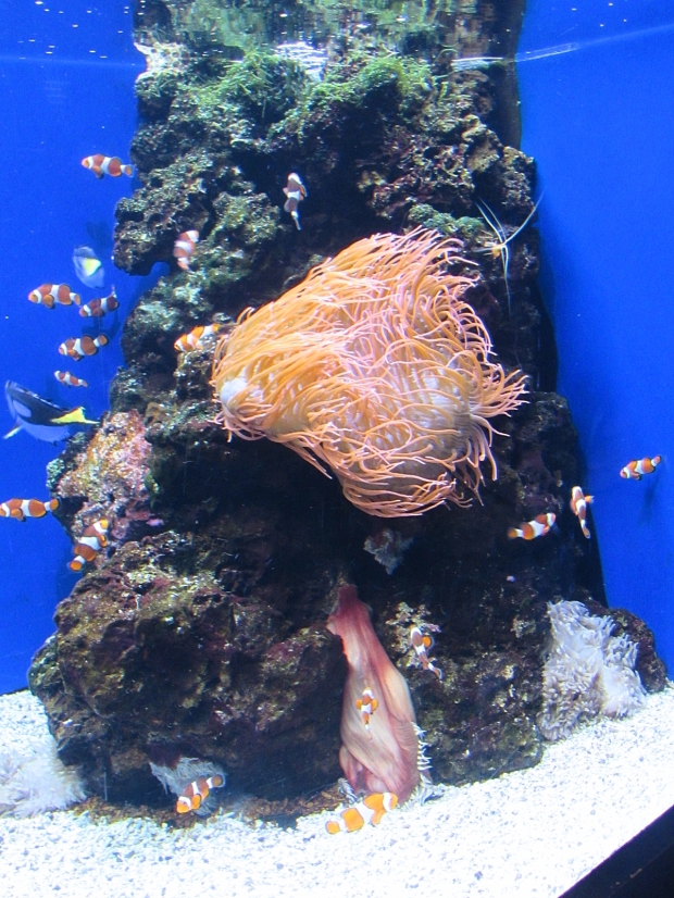 hawaii aquarium 1