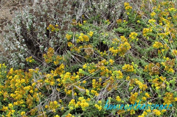 coastal-flowers