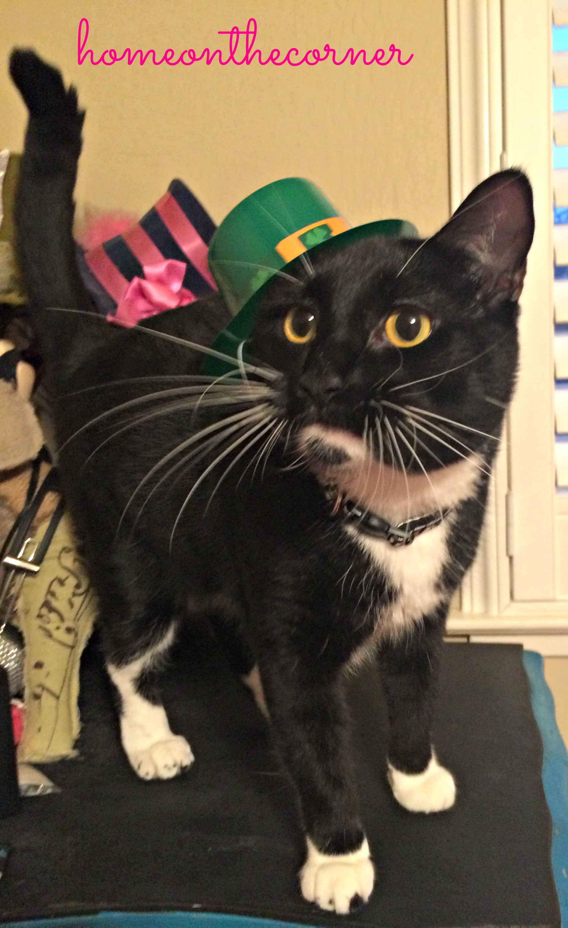 target-cute-with-hat