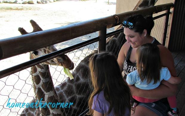 zoo 2017 giraffe