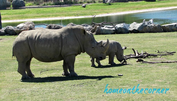 zoo 2017 rhino mommy and baby