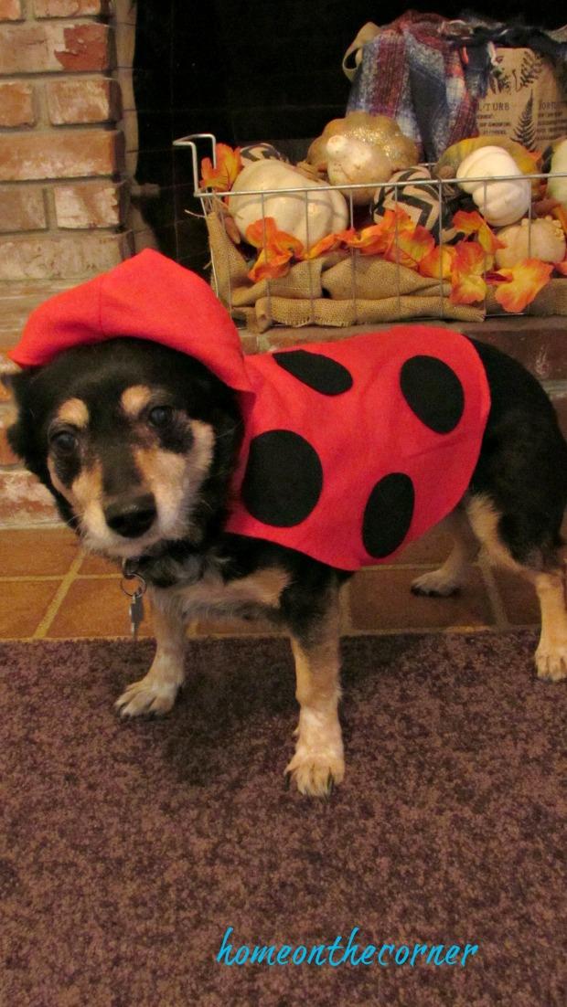 halloween 2017 ezzy the ladybug