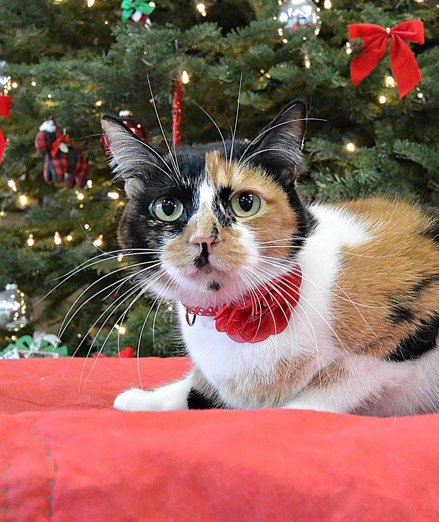 Amelia Christmas