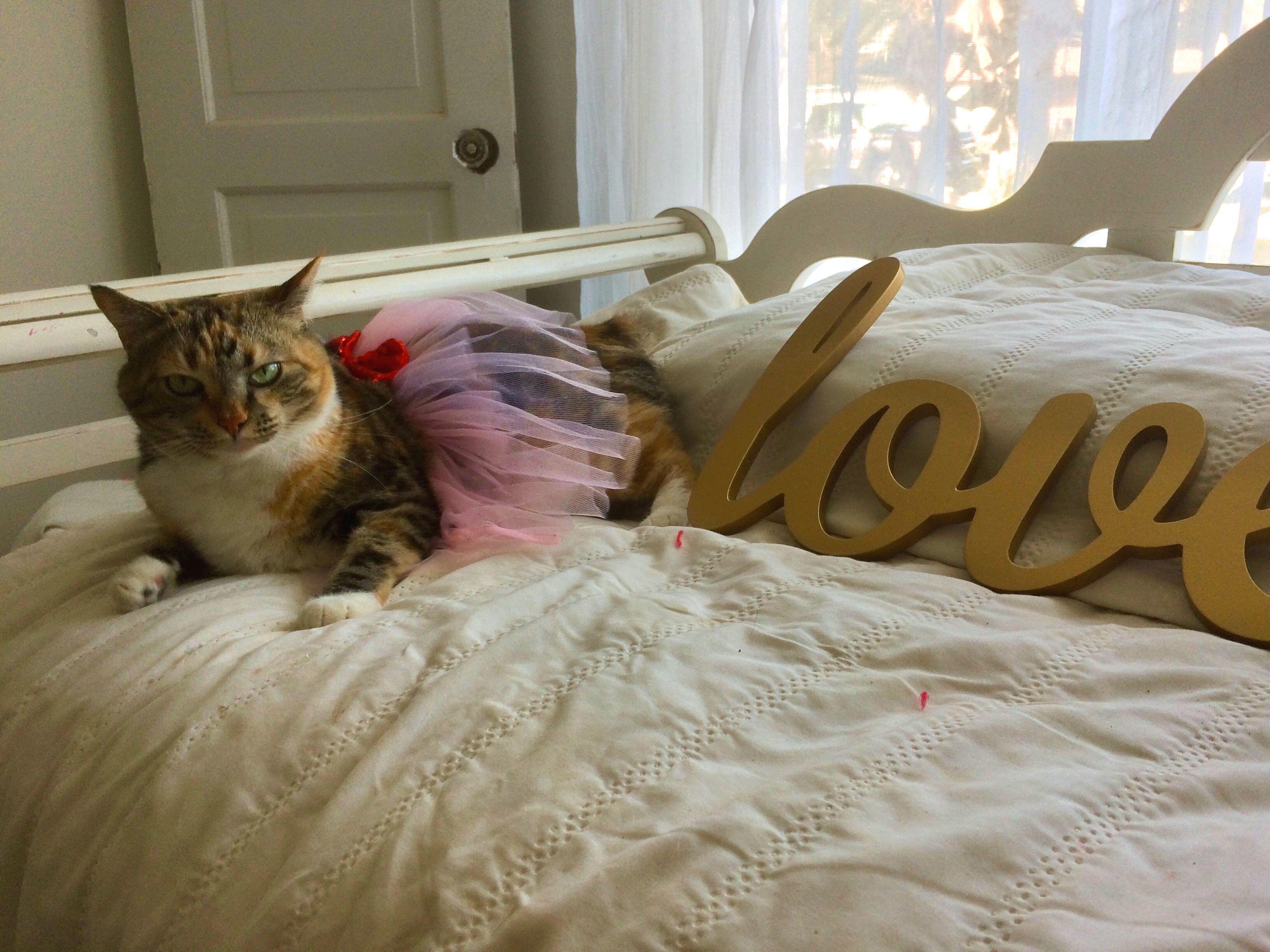 Valentines Day Pets Kiara