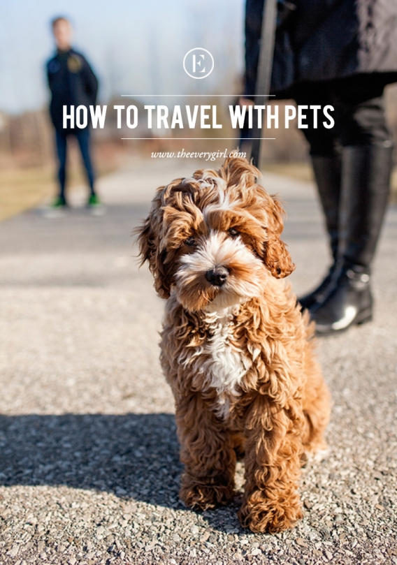 how-to-travel-with-pets-5.jpg