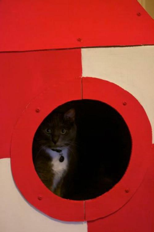 9-cat-cardboard-castle.jpg