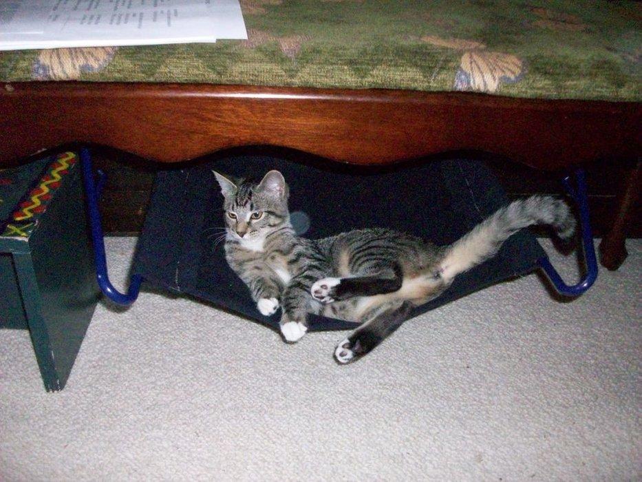 Simple Cat Hammock.jpg