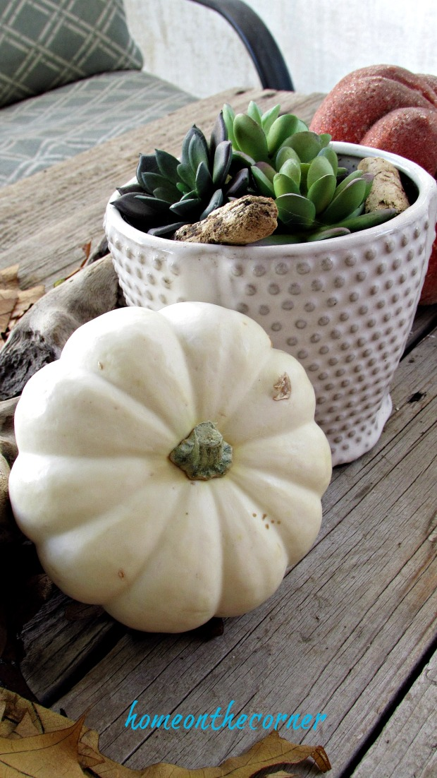 fall 2018 back porch white pumpkin and succulents