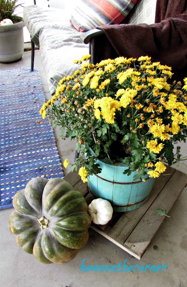 fall 2018 mums and pumpkins
