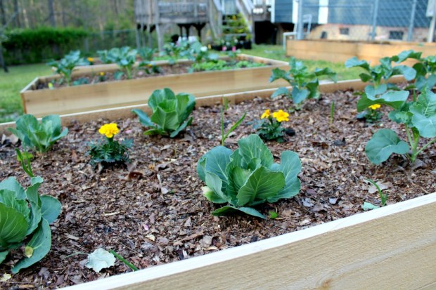 Easy DIY Raised Garden Bed