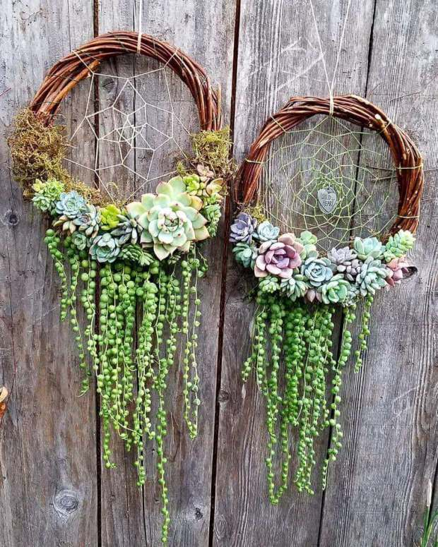 Succulent Dream Catchers