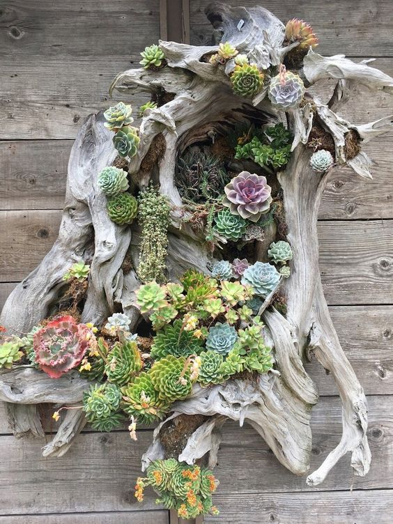 Tree Stump Succulent Garden.jpg
