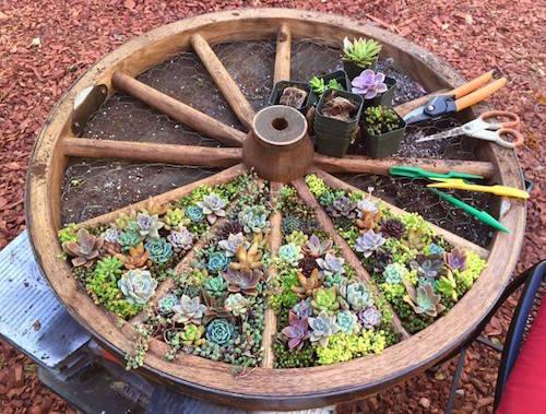 Wagon Wheel Garden.jpg