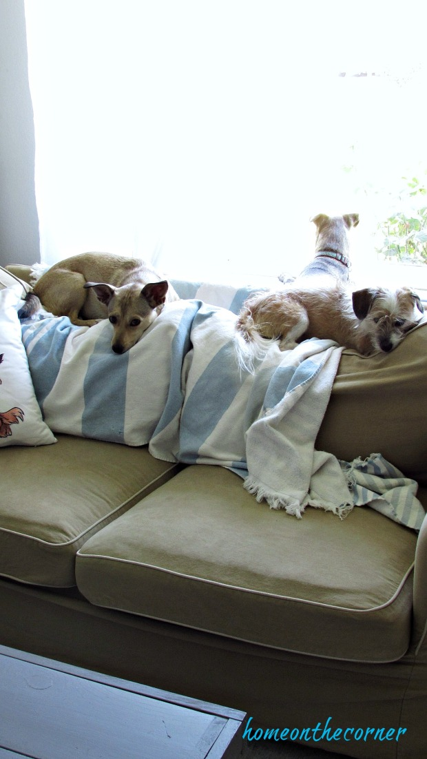 new living room dogs helpers