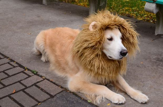 Lion Costume.jpg