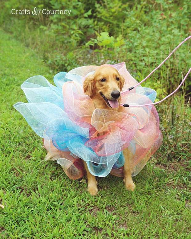 luffa-dog-costume-outside.jpg