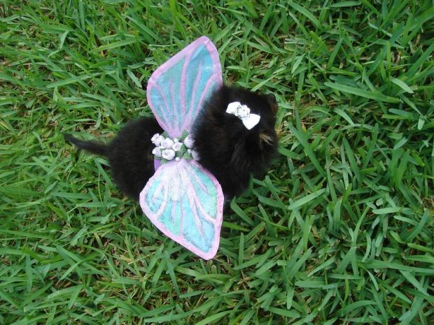 Puppy Fairy Wings.jpg